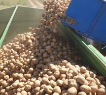 Završena kampanja vađenja krompira sa vakufskih parcela u Janji